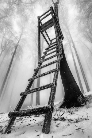 Photo for View of a winter beech forest with wooden hunter's seat and fog in the background - Royalty Free Image