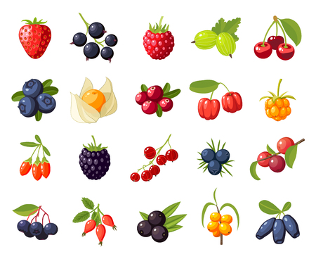 Illustration for Set branches berries and leaves: cherry, rose, strawberry, acai, raspberry, juniper, cranberry, cloudberry, blueberries, goji, acerola, blackberries, currants, honeysuckle. Vector flat icon isolated - Royalty Free Image