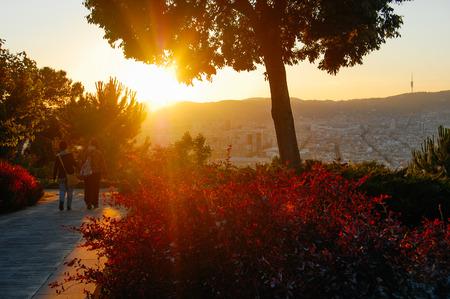 Foto de magic nature, Park and trees in the evening sun, summer landscape - Imagen libre de derechos