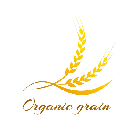 Illustration for Ears of Wheat, Vector Illustration, Icon of Premium Quality Farm Product - Royalty Free Image