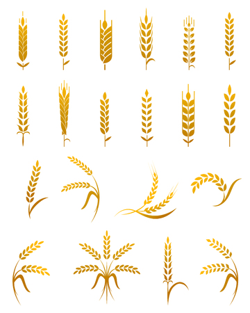 Illustration for Set of simple wheat ears icons and wheat design elements for beer, organic wheat local farm fresh food, bakery themed wheat design, wheat grain, wheat elements, wheat simple. - Royalty Free Image