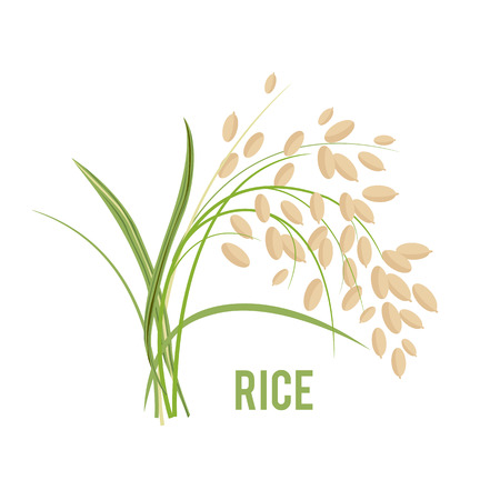 Illustration for Grains in the flat style icon design vector illustration - Royalty Free Image