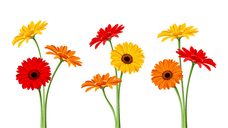 Illustration for Gerbera flowers. Vector illustration. - Royalty Free Image