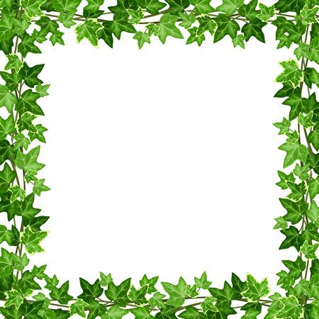 Ilustración de Vector frame with green ivy leaves on a white background. - Imagen libre de derechos