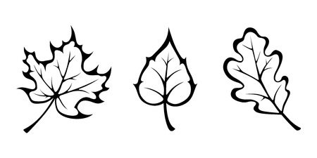 Illustration pour Vector black contours of autumn maple, oak and birch leaves isolated on white. - image libre de droit