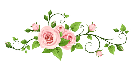 Illustration for pink rose isolated on a white background. - Royalty Free Image