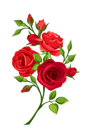 Illustration for Vector branch of red roses isolated on a white background. - Royalty Free Image