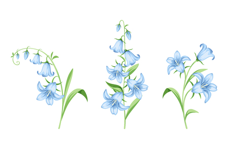 Illustrazione per Set of vector blue bluebell flowers isolated on a white background. - Immagini Royalty Free