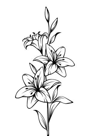 Illustrazione per Vector black and white contour drawing of lily flowers. - Immagini Royalty Free