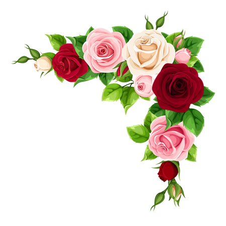 Illustrazione per Vector corner background with red, burgundy, pink and white roses. - Immagini Royalty Free
