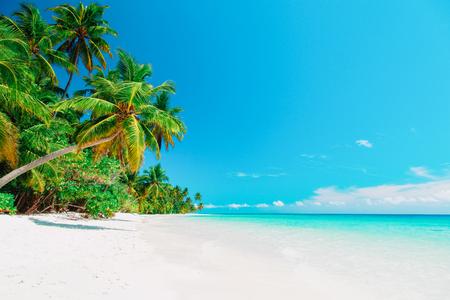 Foto de tropical sand beach with palm trees - Imagen libre de derechos
