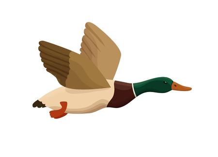 Ilustración de Duck from swamp isolated icon in cartoon style, flying bird for hunting colorful vector illustration. - Imagen libre de derechos