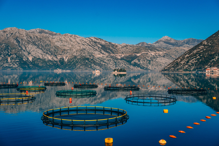 Foto de Fish farm in Montenegro. The farm for breeding and fish farming in the Bay of Kotor. - Imagen libre de derechos