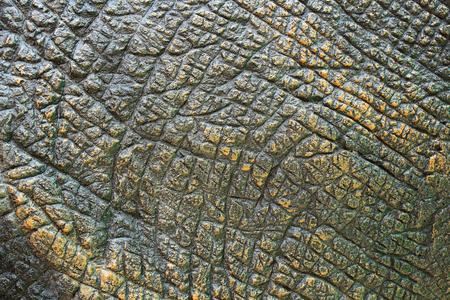 Photo for Dinosaur Skin Texture. - Royalty Free Image