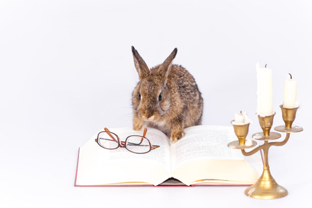Photo for Bunny - Royalty Free Image