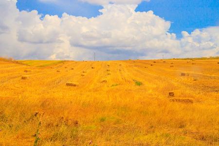 Photo pour Wheat field and cloud sky - image libre de droit