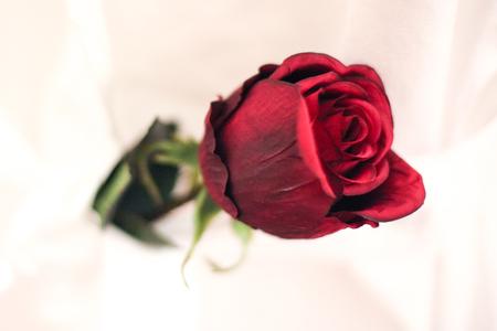 Foto de Rose in glass jar - Imagen libre de derechos