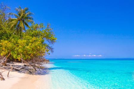 Foto de Dream palm on the beach - Imagen libre de derechos