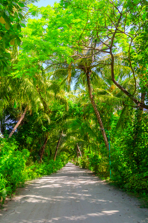 Photo for A road in the middle of the forest - Royalty Free Image
