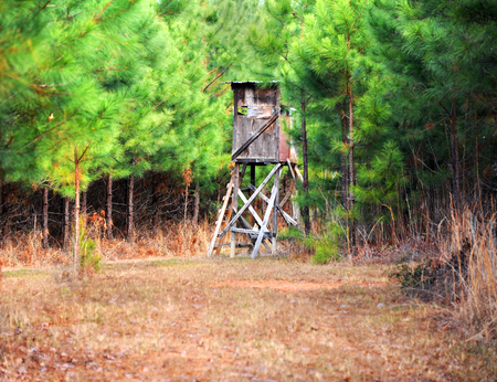 Photo for Deer stand is tucked away in a dense pine thicket in East Texas.  Stand is built of 2x4s and plywood. - Royalty Free Image