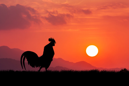 Foto de Roosters crow stand on a wind turbine. In the morning sunrise background - Imagen libre de derechos