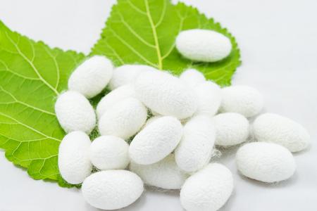 Foto de White silk cocoon with mulberry leaf on white background - Imagen libre de derechos