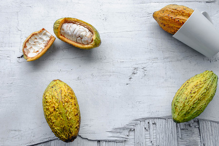 Photo for Fresh cocoa fruit on a white wooden background. - Royalty Free Image