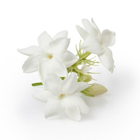 Foto de Jasmine Flower Isolated on White Background - Imagen libre de derechos