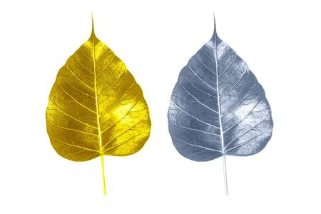 Foto de Golden bodhi leaves with silver and green on a white background - Imagen libre de derechos