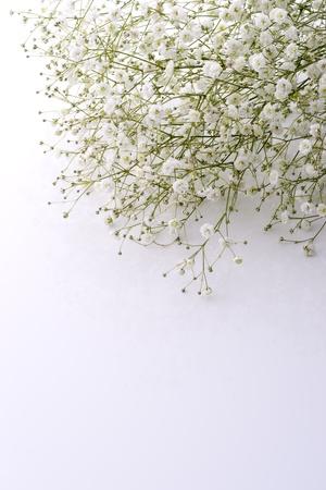 Foto für Baby's breath flowers in white background - Lizenzfreies Bild