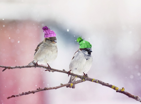 Foto de two cute little birds Sparrow sitting in a tree in the garden in wonderful hats related - Imagen libre de derechos