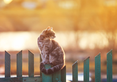 Foto de young beautiful cat sits in the village of on the fence evening during sunset - Imagen libre de derechos