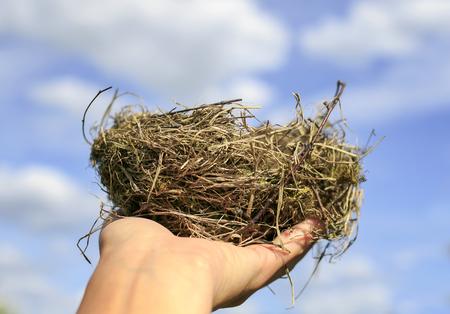 Foto de bird's nest of small branches lies on the outstretched palm against the clear blue sky - Imagen libre de derechos
