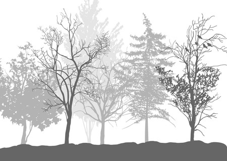 Foto per Silhouettes of trees in the forest - Immagine Royalty Free