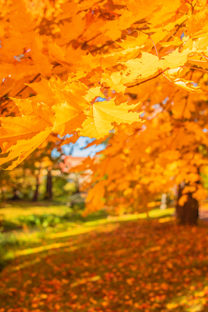 Photo for Autumn landscape. Autumn trees with Yellow and Orange leaves in park. Beautiful nature scene. - Royalty Free Image