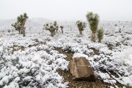 Photo pour Snow-covered joshua trees in Death Valley National Park, California - image libre de droit