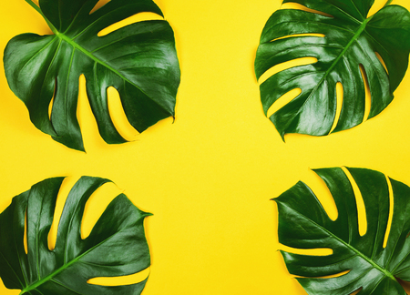 Photo for Four philodendron monstera on yellow. Tropical background. - Royalty Free Image