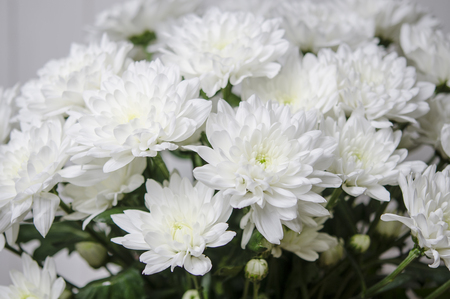Photo pour Large bouquet of white chrysanthemums with green stalks stands against a white wooden wall - image libre de droit