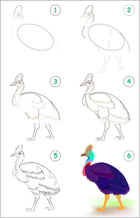 Illustration pour Page shows how to learn step by step to draw a cute cassowary. Developing children skills for drawing and coloring. Vector image. - image libre de droit