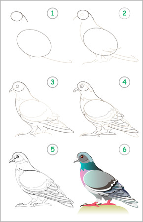 Illustration pour Page shows how to learn step by step to draw a cute pigeon. Developing children skills for drawing and coloring. Back to school. Vector cartoon image. - image libre de droit