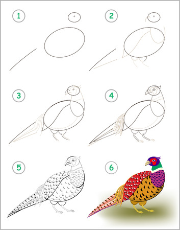 Illustration pour Educational page for kids shows how to learn step by step to draw a pheasant with bright feathering. Back to school. Developing children skills for drawing and coloring. Vector cartoon image. - image libre de droit