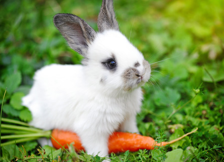 Photo for Funny baby white rabbit with a carrot in grass - Royalty Free Image