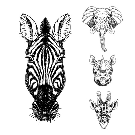 Illustration pour Vector set of hand drawn animal. Vintage illustration with elephant, giraffe, rhino and zebra. - image libre de droit