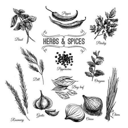 Illustrazione per Vector hand drawn set with culinary herbs and spices. Sketch illustration. - Immagini Royalty Free
