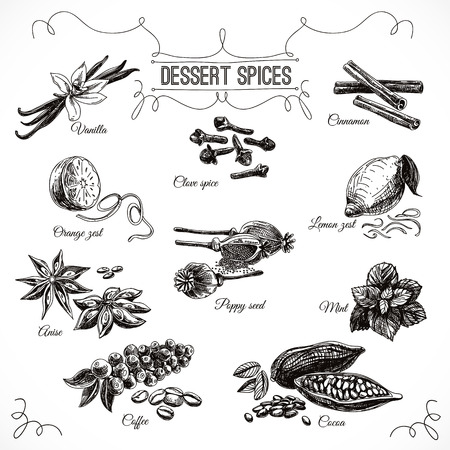 Illustration pour Vector hand drawn set with Dessert Spices. Vintage illustration. Retro collection with Vanilla, poppy, orange zest, lemon peel, cocoa, clove spice, anise and mint leafs. - image libre de droit