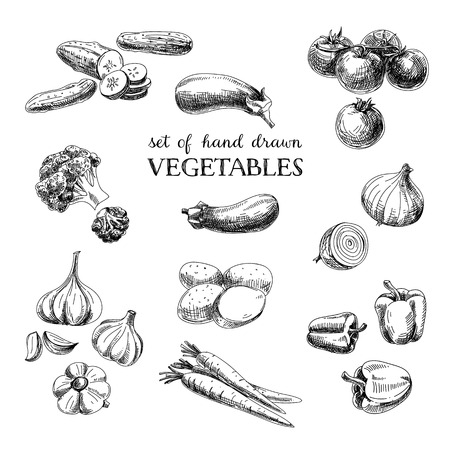 Illustrazione per Vector hand drawn sketch vegetable set. Eco foods.Vector illustration. - Immagini Royalty Free
