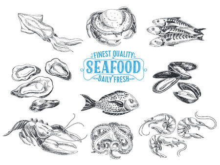 Illustration pour Vector hand drawn illustration with seafood. Sketch. - image libre de droit