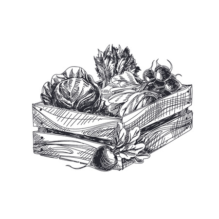 Illustration pour Beautiful vector hand drawn vegetables Illustration. Detailed retro style crate with vegetables image. Vintage sketch element for labels, packaging and cards design. - image libre de droit