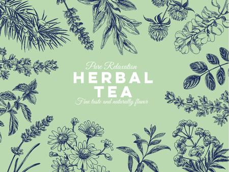 Ilustración de Beautiful vector hand drawn tea herbs Illustration. Detailed retro style images. Vintage sketches for labels. Elements collection for design. - Imagen libre de derechos