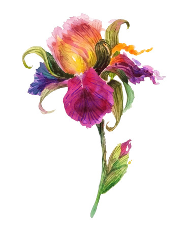 Ilustración de Beautiful watercolor iris flower. Watercolor floral illustration. - Imagen libre de derechos